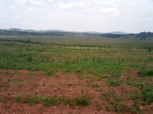 Mukoni-Kiyunga2